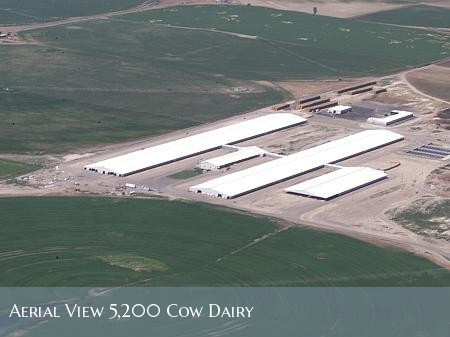5,200 cow dairy - aerial view