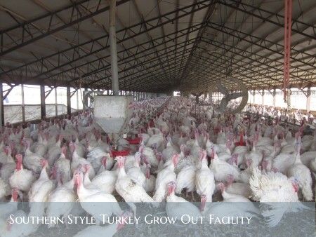 southern style turkey grow out facility